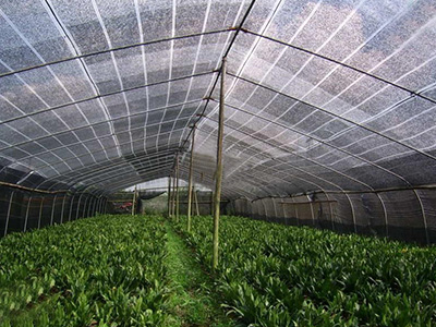 greenhouse netting