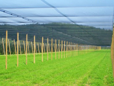 shade nets for agriculture